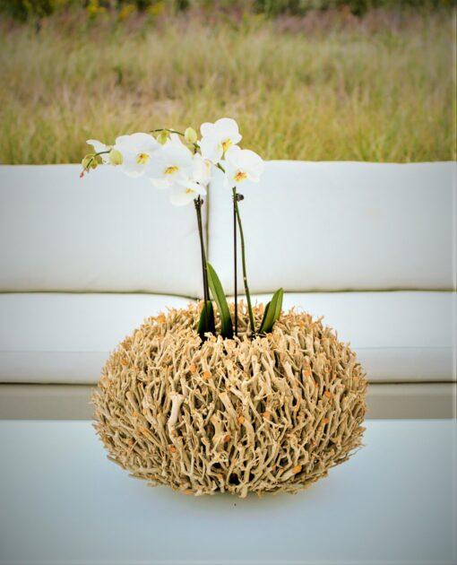 ADORE driftwood twig wood teak lantern round decor vase Nature Home Decor Contract